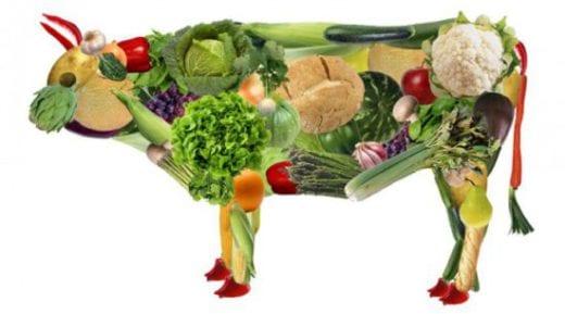 овощная корова