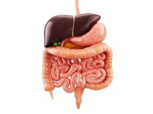 болезни жкт симптомы и лечение