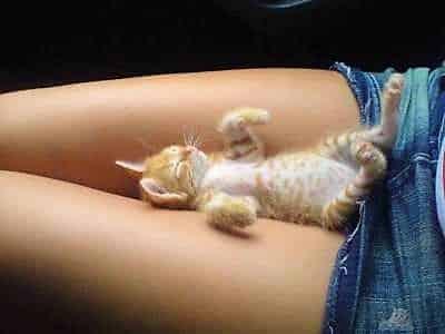 кошки ложатся на больное место