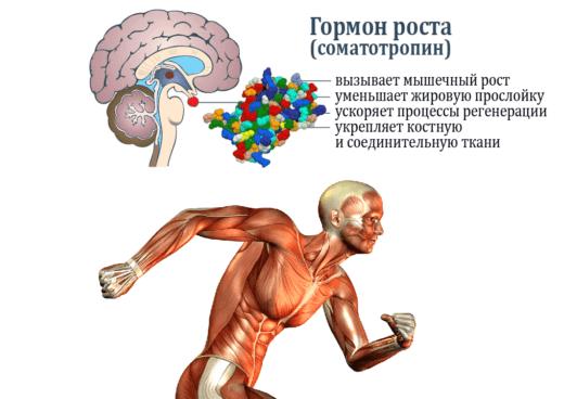 гормон роста соматотропин