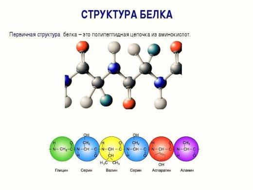 цепочки аминокислот белка