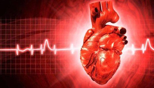Как укрепить сердечную мышцу в домашних. - Лечим сердце 96