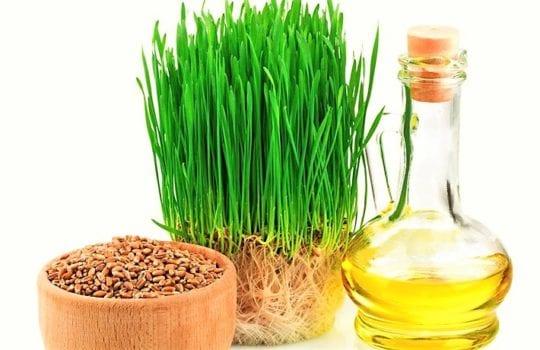 витамина Е в маслах зародышей пшеницы