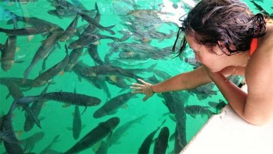 рыбы на Чео Лан