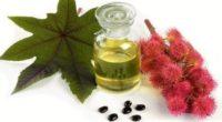 Касторовое масло для волос: как использовать для укрепления и от выпадения?