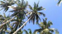 Самуи: остров Тайланда и пляжи Чавенг, Нора Бич и Чоенг Мон