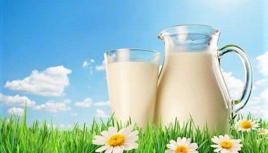 Молоко: можно ли пить взрослым? Достоинства и недостатки молока