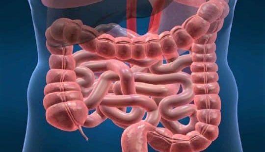 Толстый кишечник: его функции, болезни и методы их диагностирования